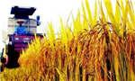 2017年中国粮食总产量超1.2万亿斤