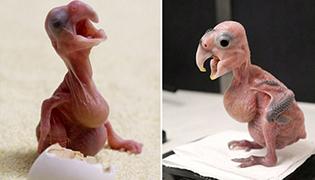 小鹦鹉因父母吵架踩碎卵壳提前出世获好心人照料