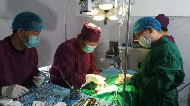 雪豹被车撞多处骨折 手术3小时成功将断骨复位