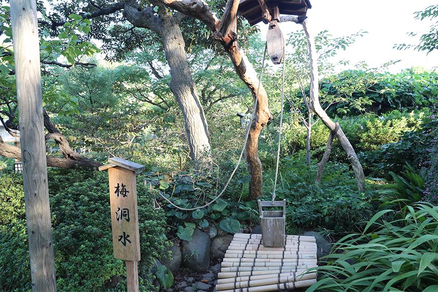 江户:向岛百花园(二)