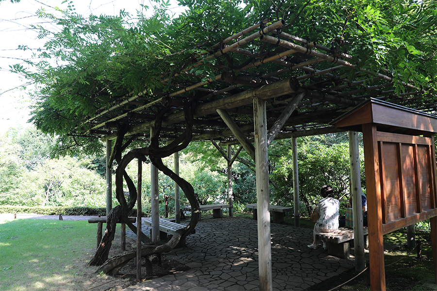 江户:殿谷户庭园之藤架