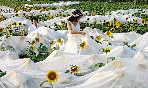 غرائب و عجائب فساتين الزفاف فى العالم 000bcdb9591a08814bab1d