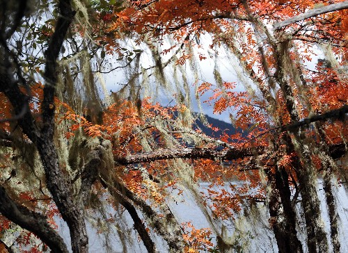 مناظر خريفية خلابة في الحديقة الوطنية بمقاطعة يونان (صور) 000802aa2f2f0a5f955102