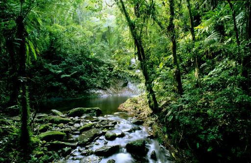 تاثير الغابات فى المناخ  000802aa2f2f0c64b55616