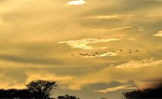 مناظر غروب الشمس في نهر زامبيزي
