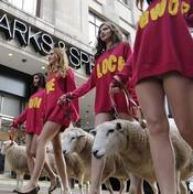 لندن تحتفل بـ'أسبوع صوف الخراف' (خاص)