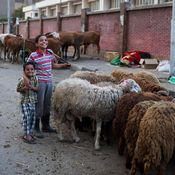 المصريون يستعدون للعيد بشراء الأضاحي