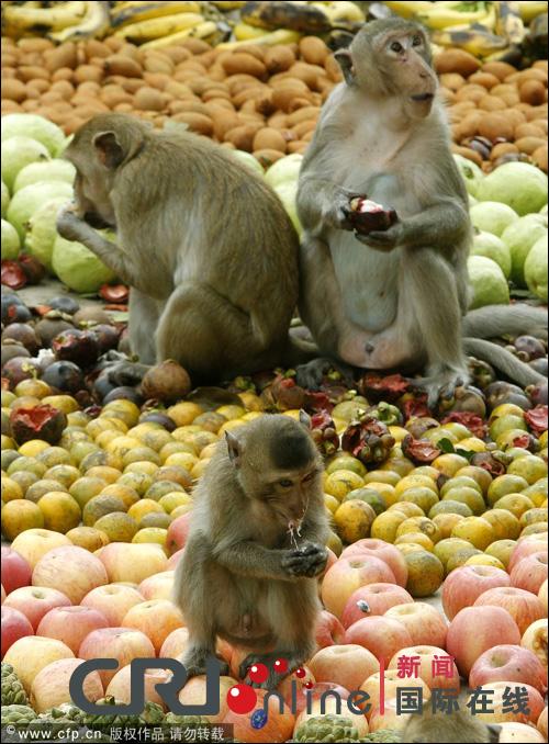 مهرجان بوفية القرود في تايلاند 001372acd7e3121d4e20