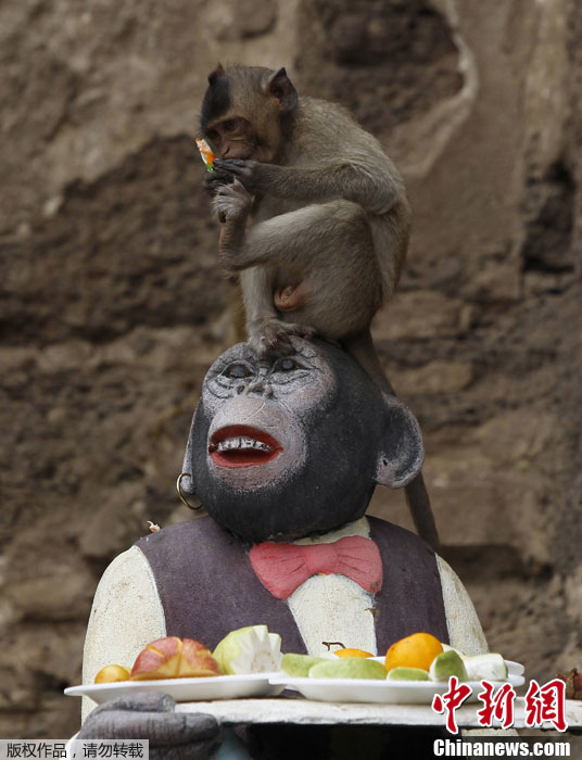 مهرجان بوفية القرود في تايلاند 001372acd7e3121d4e2f