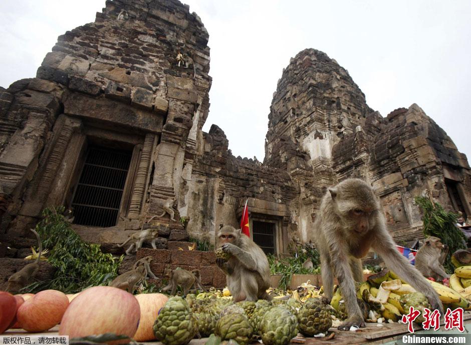 مهرجان بوفية القرود في تايلاند 001372acd7e3121d4e39