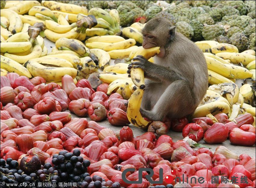 مهرجان بوفية القرود في تايلاند 001372acd7e3121d4e3d