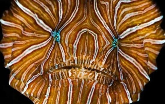 أسماك غريبة تحت البحار العميقة 0013729e79721302883c1b