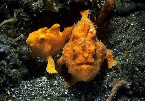 أسماك غريبة تحت البحار العميقة 0013729e79721302883c1c