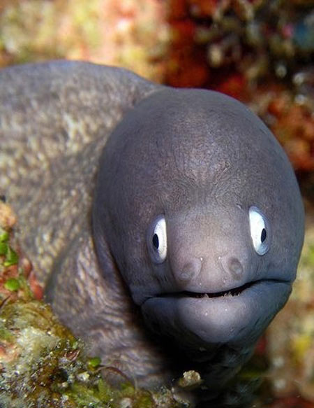 أسماك غريبة تحت البحار العميقة 0013729e79721302883c1d
