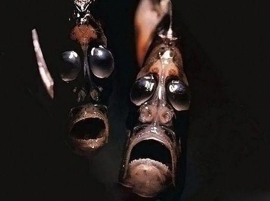 أسماك غريبة تحت البحار العميقة 0013729e79721302883c1f