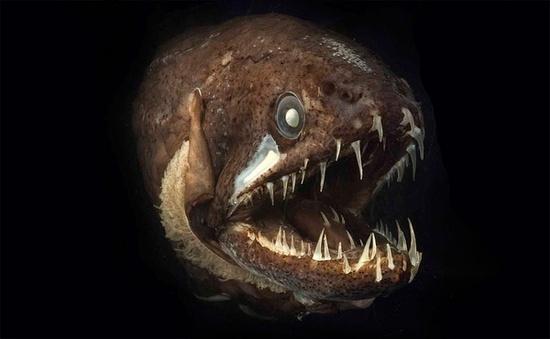 أسماك غريبة تحت البحار العميقة 0013729e79721302883c20