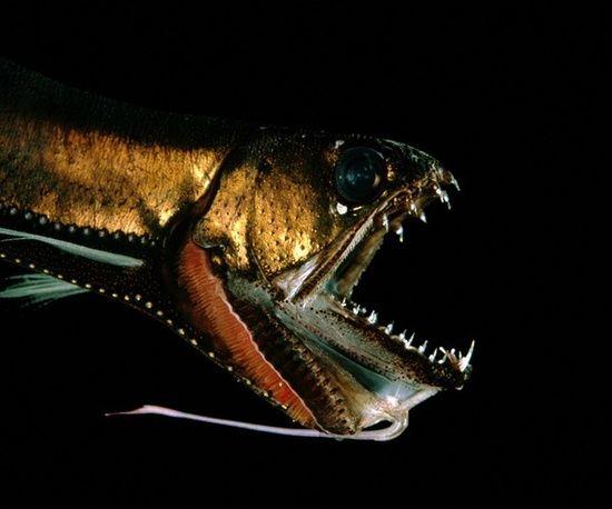 أسماك غريبة تحت البحار العميقة 0013729e79721302883c21