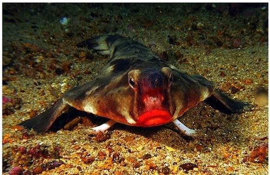 أسماك غريبة تحت البحار العميقة 0013729e79721302883c22