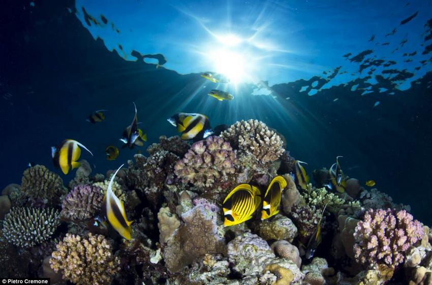 إبداعات التصوير الفوتوغرافي تحت الماء