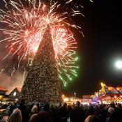 أكبر شجرة لعيد الميلاد بطول 27.5 متر تظهر في بريطانيا