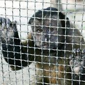 سورابايا باندونيسيا .. أسوأ حديقة حيوانات في العالم