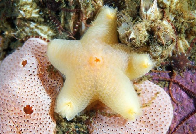كائنات البحر الأبيض السحرية الملونة