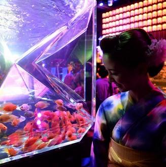معرض أسماك ذهبية يفتتح في طوكيو (خاص)