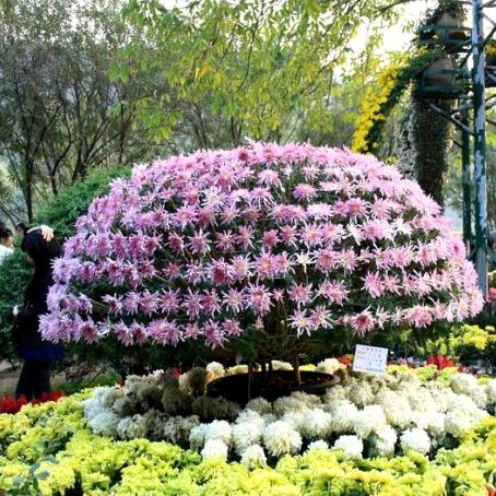 مدينة تشونغشان ـ مقاطعة قوانغدونغ