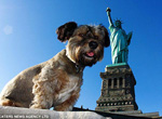 Un chien achève un tour du monde en six mois