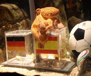 Coupe du monde 2010: La pieuvre Paul choisit l'Espagne