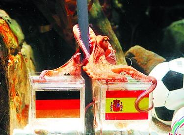 Un film chinois sur la Coupe du monde 2010 rebaptisé Assassiner Paul le poulpe