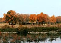 Le parc national des peupliers à feuilles diversiformes de Zepu