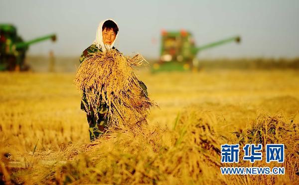 l'accroissement de la production céréalière pendant sept ans d'affilée