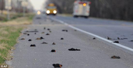 Des centaine d'oiseaux morts sur l'autoroute en Louisiane