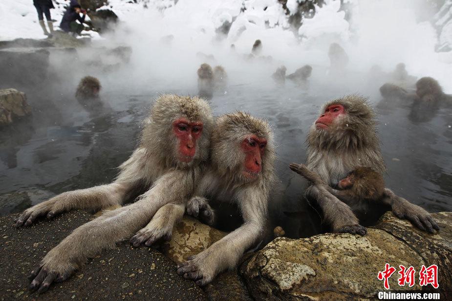 Monkey Island Steaming