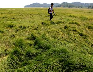 Sécheresse: le plus grand lac d'eau douce de Chine est devenu une vaste prairie