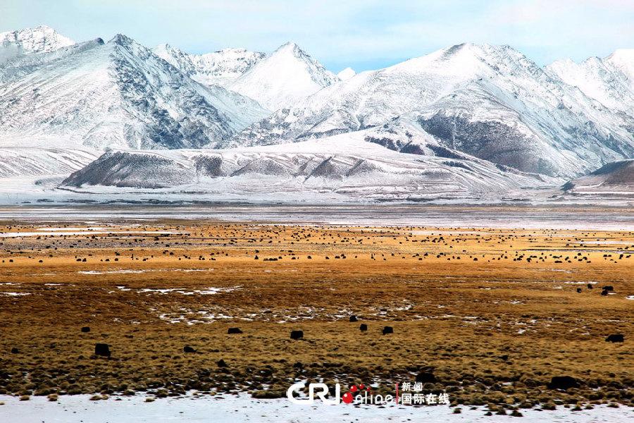 Bouddha Bar/Images du jour: La grandeur des montagnes tibétaines 001ec94a27150fa4540017
