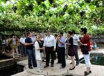 Zaozhuang : les vignes du district de Shanting attirent les visiteurs étrangers