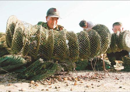 Des pêcheurs de Laoting, province du Hebei, tiennent un filet rempli de pétoncles morts qui, selon eux, ont été tués par le déversement d'hydrocarbures dans la baie de Bohai, dimanche.