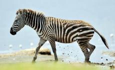 Le parc national de Nakuru au Kenya