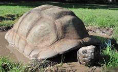 Une tortue âgée de 300 ans au zoo d'Harare