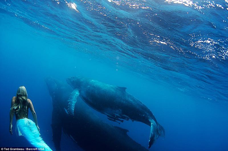 Hannah fraser, la femme sirène, danse avec des baleines