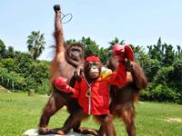 Les animaux sauvages font leur show en profitant des Jeux olympiques