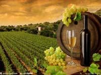 Outre le marché du vin, les sociétés viticoles françaises ciblent les vignobles chinois