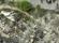 Chine : un séisme de magnitude 7,0 secoue le Sichuan