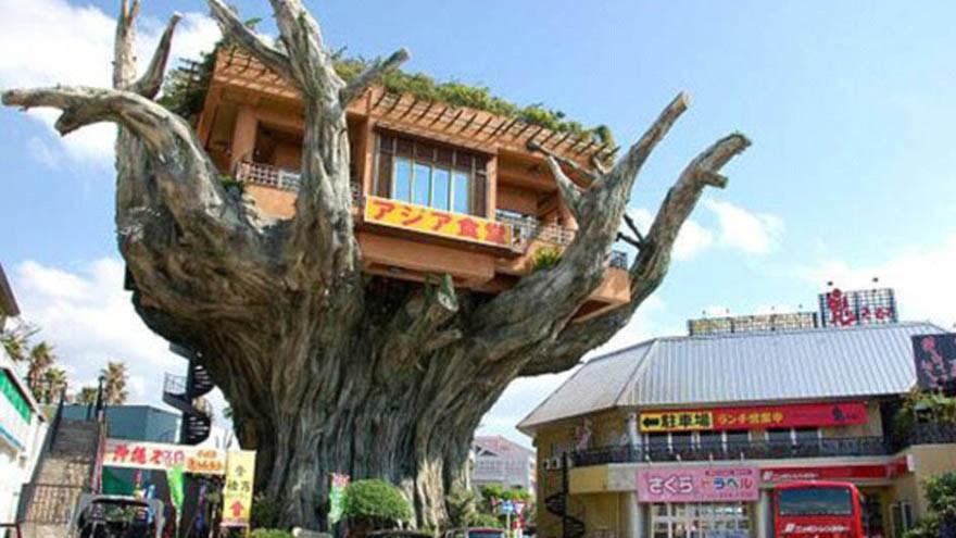 Les plus belles maisons dans les arbres - Les 10 plus belles maisons du monde ...