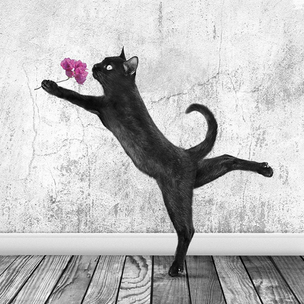 Calendrier Glamour Puss 2014 : des chats très « matouvu »