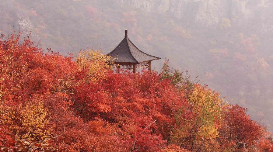 Paysage automnal : les collines Bofeng en rouge-orangé