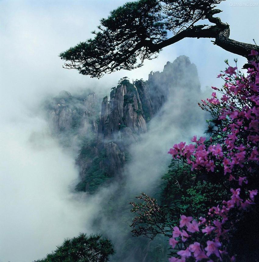 Jiangxi : un tapis d'azalées sur le mont Sanqing