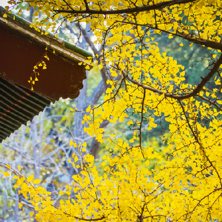 La beauté du temple de Dajue en automne